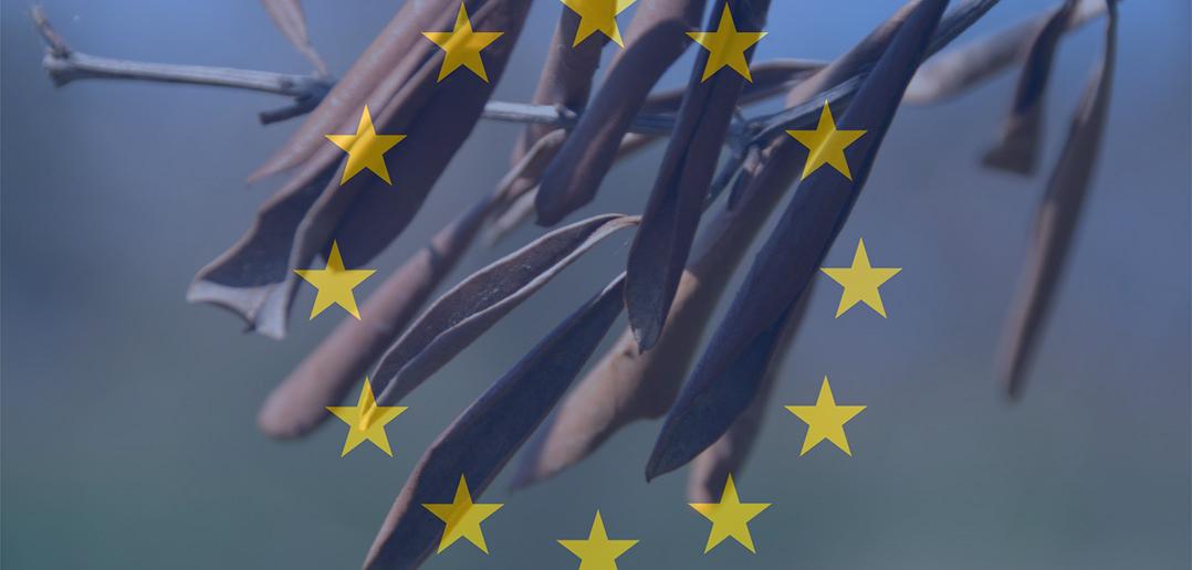 Xylella: Commissione Ue Faccia chiarezza su reimpianti e fermi la speculazione in corso